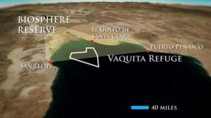vaquita-zoom21-535x300