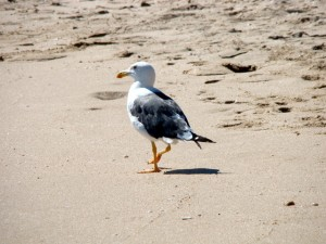 Nine Fascinating Facts You May Not Know About Seagulls